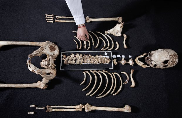 Cheddar Man skeleton