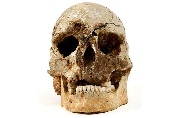 Cheddar Man skull original