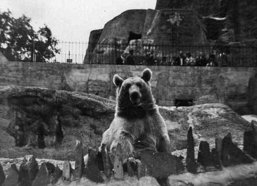 Bear at London Zoo