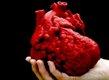 3D model of a heart