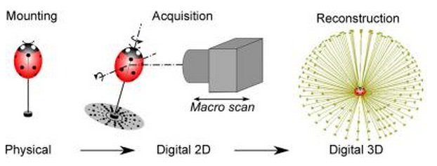 Insect scanning process