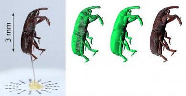 3D weevil