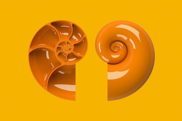 Shells RPD International