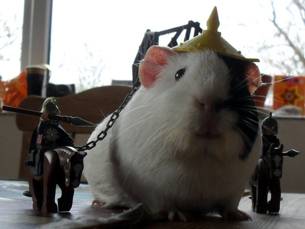 Guinea pig battle armour