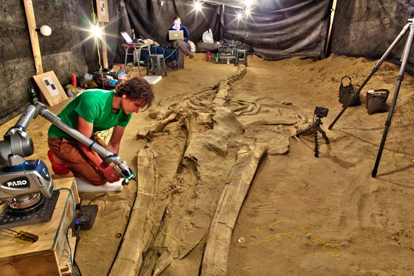 Scanning fossils
