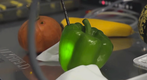 Surgeons used bell peppers for practice