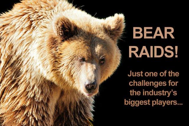 Bear DDD