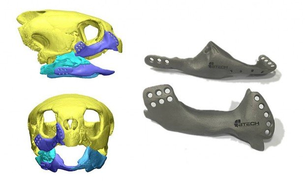3D-printed-jaw-implant-for-sea-turtle-1024x608.jpg