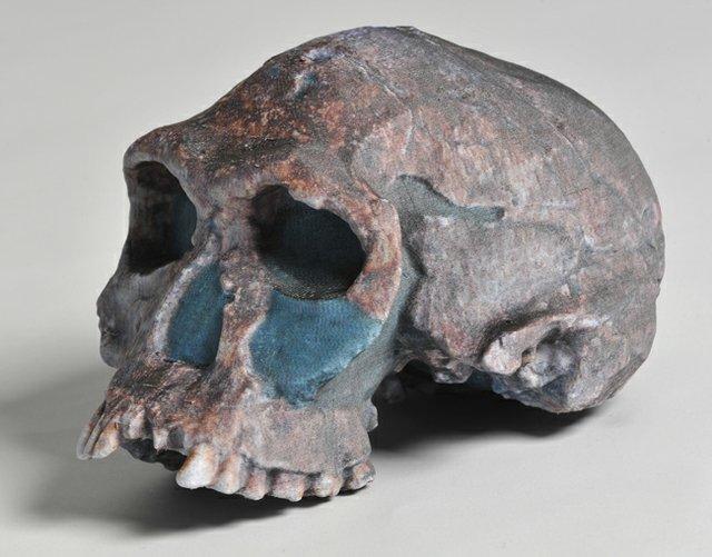 Mcor Iris Skull
