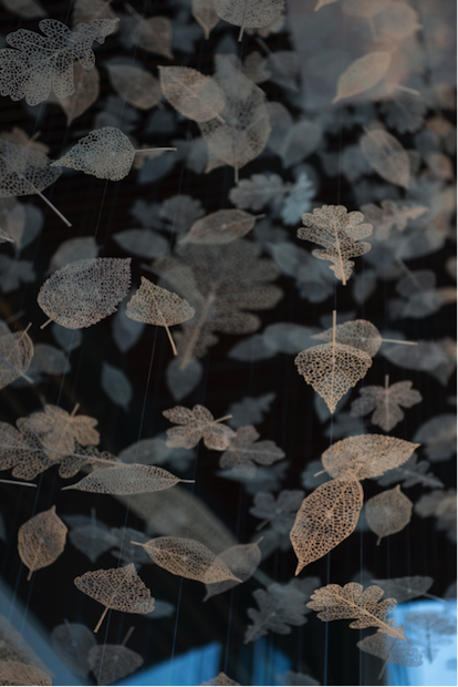 leaves-3d.png