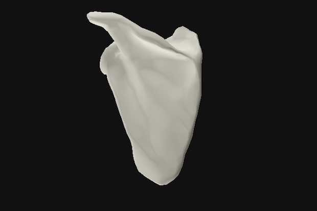 Oxford Uni human joint 3D model shoulder